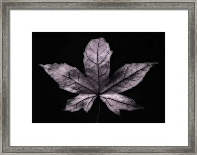 Silver Leaf Framed Print by Artecco Fine Art Photography