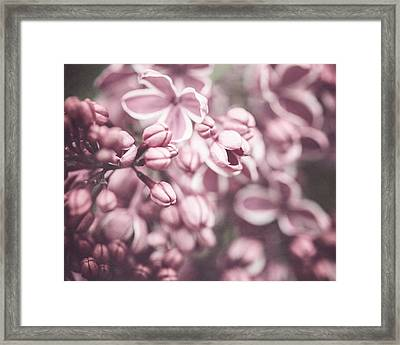 Silver Lilacs Framed Print by Lisa Russo