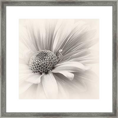Framed Print featuring the photograph Silver Mist by Darlene Kwiatkowski