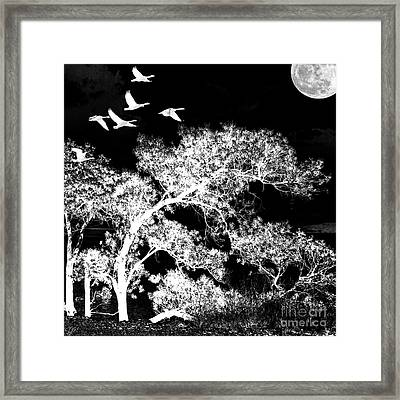 Silver Nights Framed Print