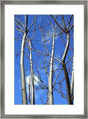 Silver Smooth Framed Print