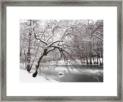 Silver Swan Framed Print by Jessica Jenney