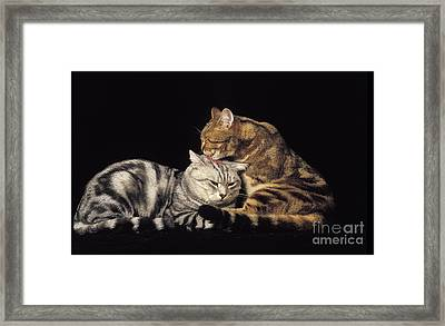 Silver Tabby And Brown Tabby Domestic Framed Print