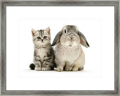 Silver Tabby And Rabby Framed Print
