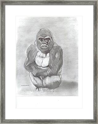 Silverback Gorilla Framed Print by Don  Gallacher