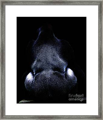 Silverback . Photoart . R7917 Framed Print by Wingsdomain Art and Photography
