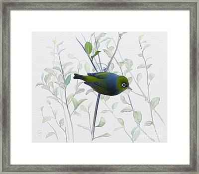 Framed Print featuring the painting Silvereye by Ivana Westin