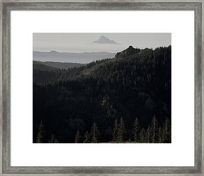 Silverstar Trees Framed Print by Benjamin Garvey