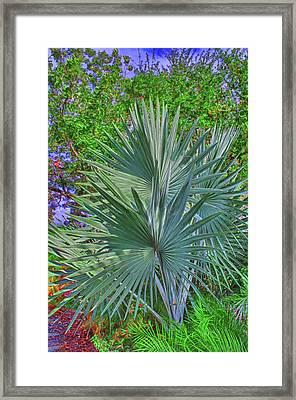 Silvery Bismark Framed Print