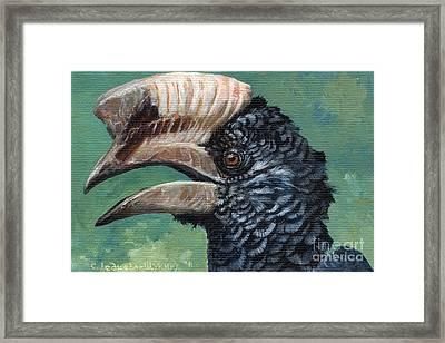 Silvery-cheeked Hornbill Framed Print by Svetlana Ledneva-Schukina