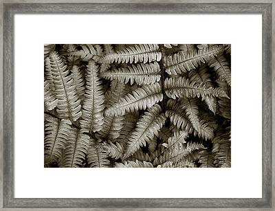 Silvery Ferns Framed Print