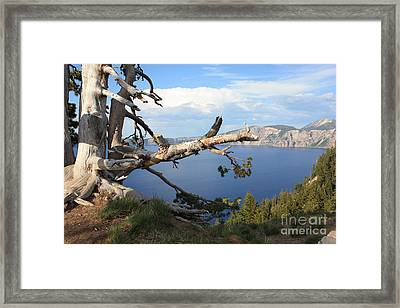 Silvery Tree Over Crater Lake Framed Print by Carol Groenen