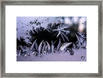 Silvery Window Fronds Framed Print by Liz Allyn