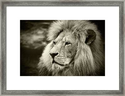 Framed Print featuring the photograph Simba by Stefan Nielsen