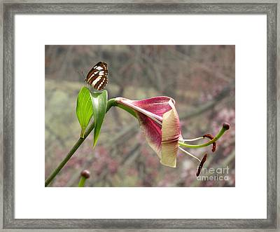 Framed Print featuring the photograph Simpatico by Misha Bean