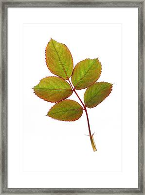 Simple And Beautiful Framed Print by Panos Trivoulides