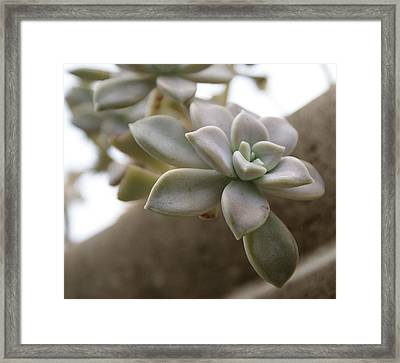 Framed Print featuring the photograph Simple Beauty by Jean Haynes