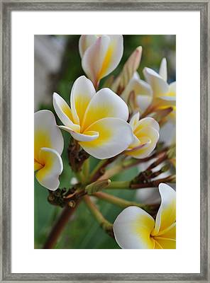 Simple Beauty Framed Print by Joe  Burns