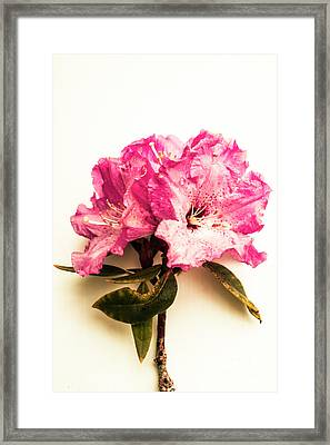 Simple Beauty Framed Print by Jorgo Photography - Wall Art Gallery