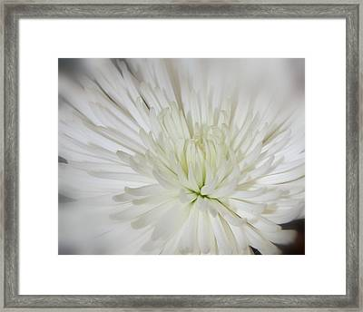 Simple Beauty Framed Print by Shannon McMannus
