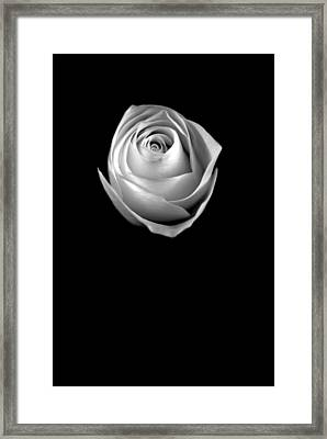 Framed Print featuring the photograph Simple Elegance by Elsa Marie Santoro