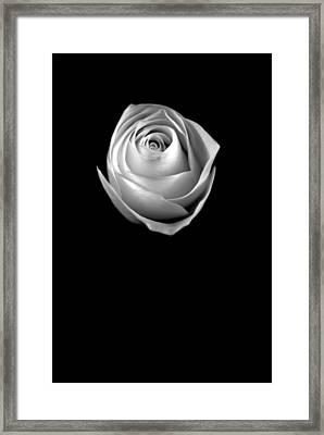 Simple Elegance Framed Print by Elsa Marie Santoro