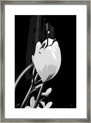Simple Elegance Framed Print by Gerlinde Keating - Galleria GK Keating Associates Inc