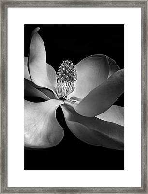 Simple Elegance Framed Print by Johan Hakansson