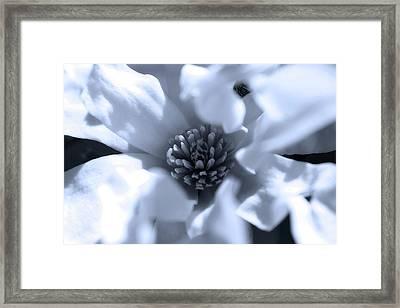 Simple Elegance Framed Print by Scott Hovind