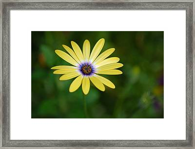Simple Flower Framed Print by Jennifer Englehardt