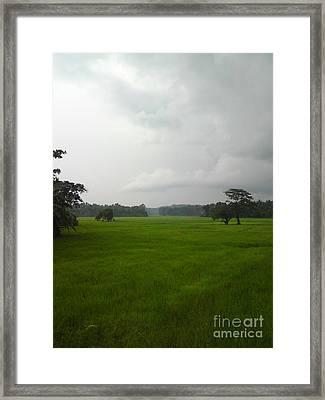 Simple Green Framed Print by Rushan Ruzaick
