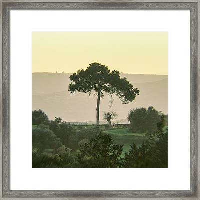 Simple Morning Framed Print by Stelios Kleanthous