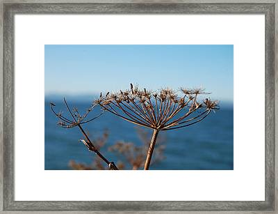 Simple Nature Framed Print by Jean Booth