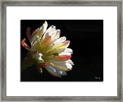 Simple Splendor Framed Print