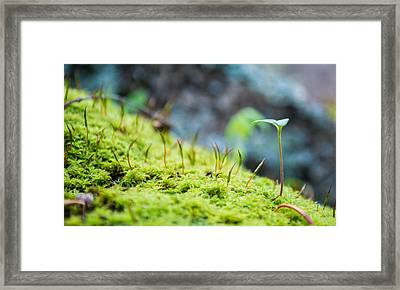 Simple Sprout Framed Print