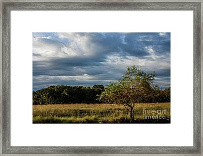 Framed Print featuring the photograph Simplicity by Iris Greenwell