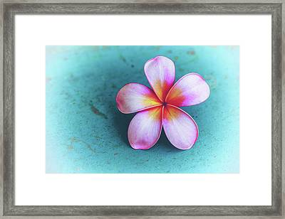 Simplicity Framed Print by Jade Moon