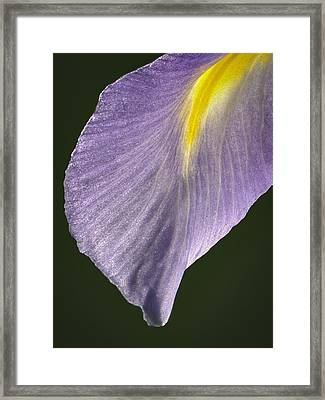 Simplicity Framed Print by Jean Noren