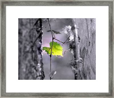 Simplicity Framed Print by Jennifer  Diaz