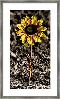 Simplicity Framed Print by Karen Scovill