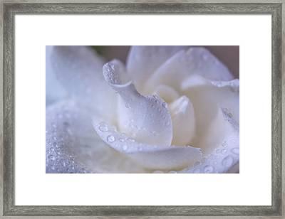 Simplicity Framed Print by Marnie Patchett