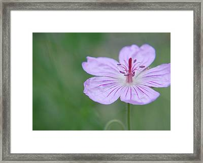 Framed Print featuring the photograph Simplicity Of A Flower by Amee Cave
