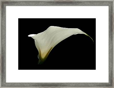 Simplicity Framed Print by Serena Bowles
