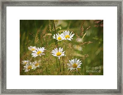 Simplicity Framed Print by Sheila Ping