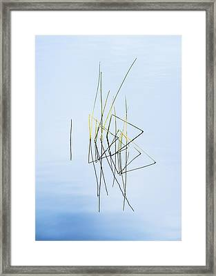 Simplicity Framed Print by Vishwanath Bhat