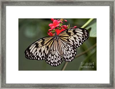 Simply A Paper Kite  Framed Print