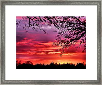 Simply Amazing Framed Print by Karen Scovill