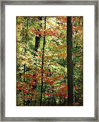 Simply Autumn Framed Print by Joan  Minchak
