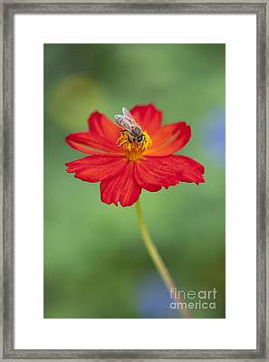 Simply Bee Framed Print by Tim Gainey