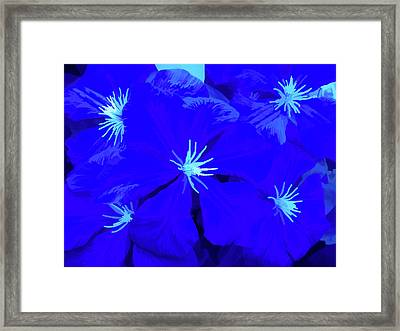 Simply Blue Passion Framed Print by Aimee L Maher Photography and Art Visit ALMGallerydotcom